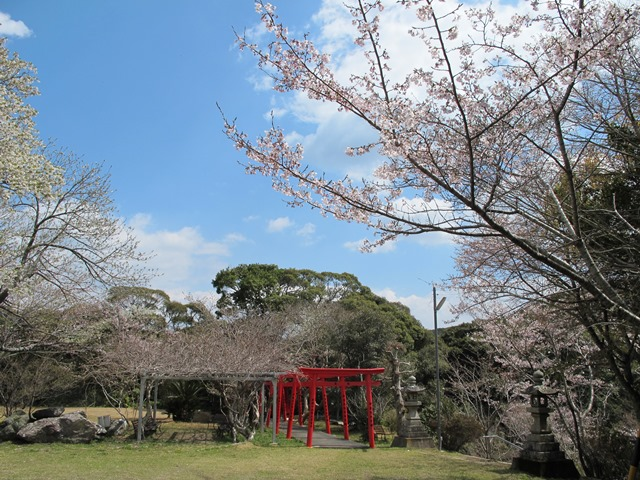 参道沿い桜並木