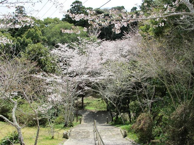 御座爪切不動尊の桜トンネル