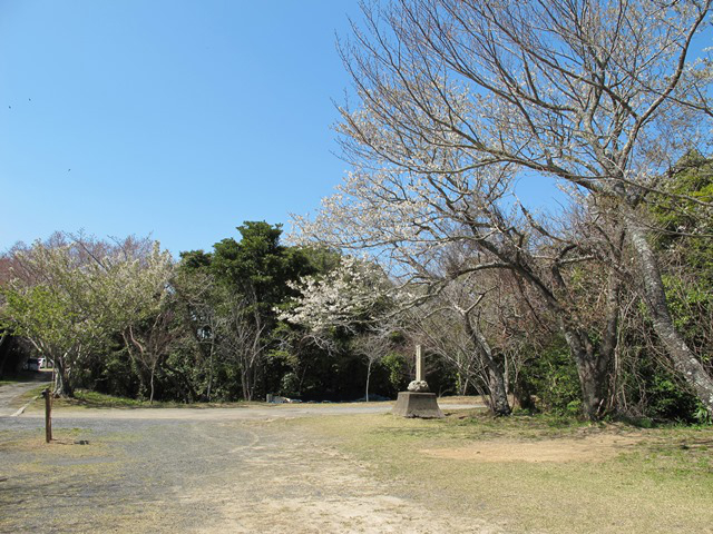 表参道広場の山桜の並び
