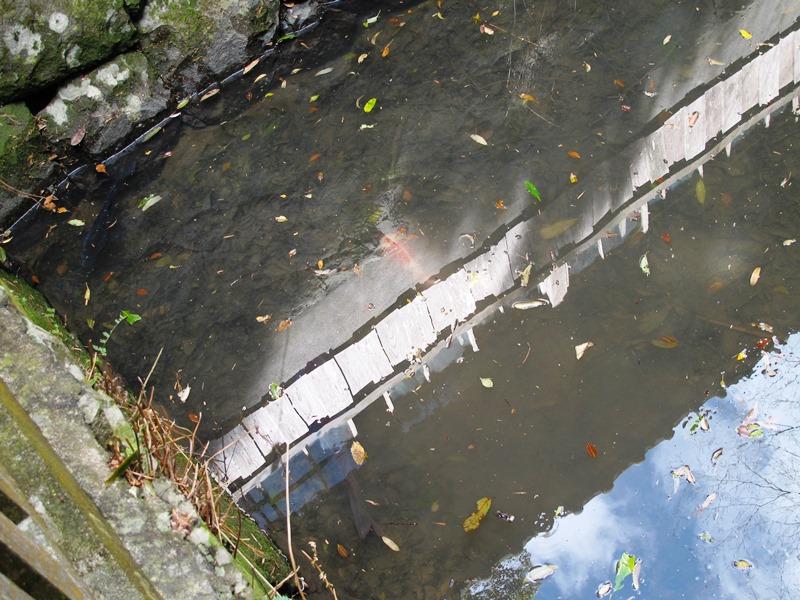 御座爪切不動尊の池の鯉3匹揃い踏み