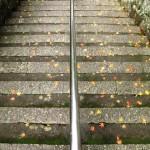 雨上がりの紅葉、管理棟手前の階段にて