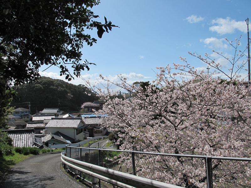 旧御座保育所の桜も満開