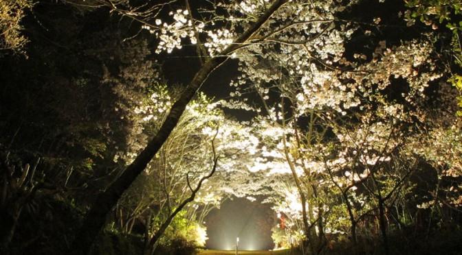 御座爪切不動尊の夜桜トンネルのライトアップ