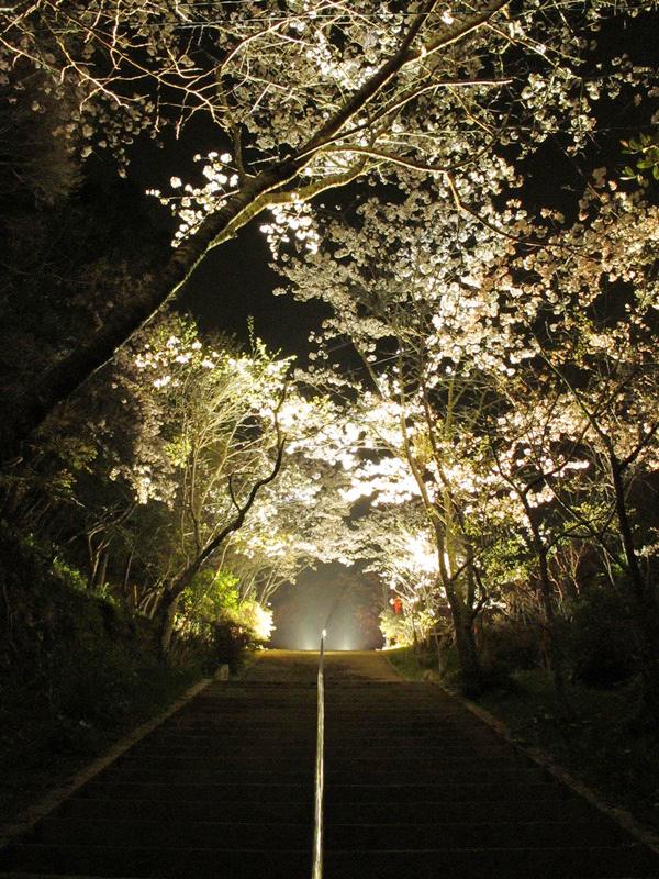 御座爪切不動尊の桜トンネルの夜桜をライトアップ
