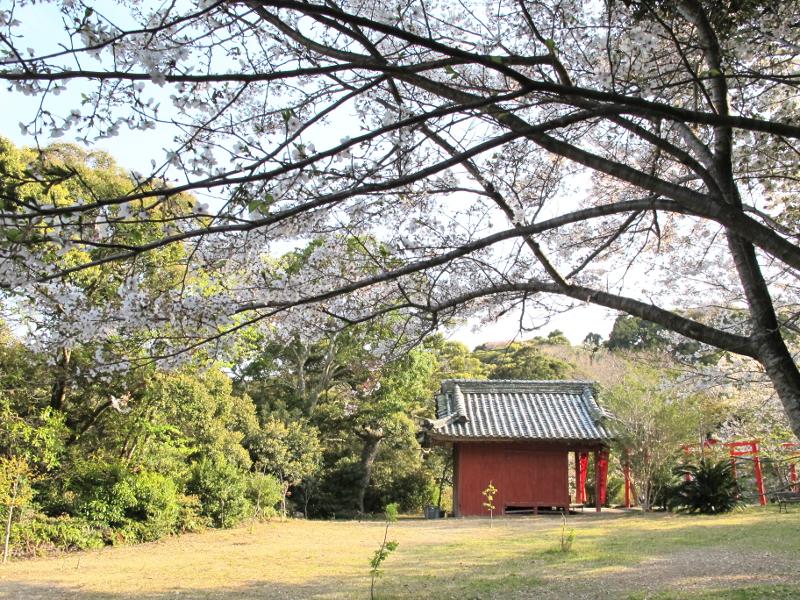 稲荷裏広場の桜