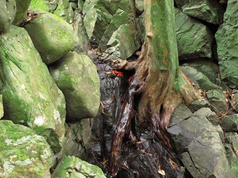 弘法の滝口には、真っ赤なカニさんが・・・。