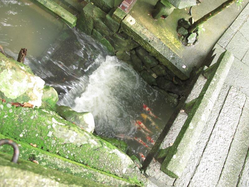 弘法の池が濁り、鯉を心配していたところ・・・。