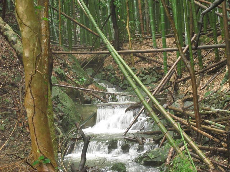 そして、弘法の滝のさらに上流も・・・。