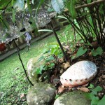クモの巣とアワビの殻