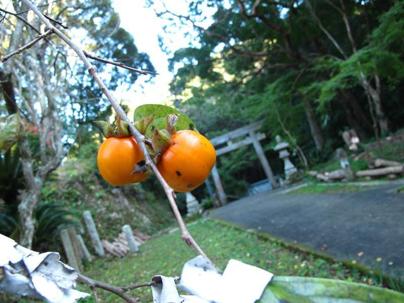 kouyounootozure05_20141122