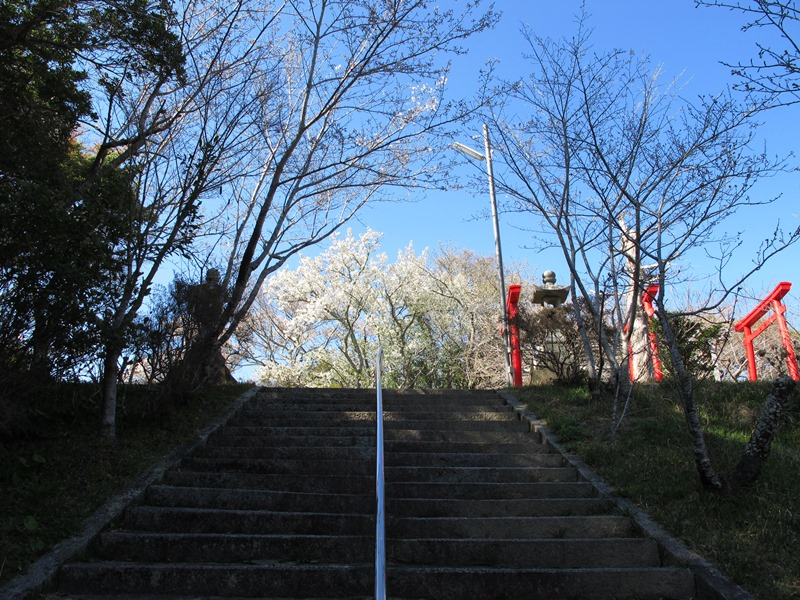 yamazakura_kaidankara