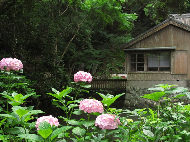 tsumekiri-fudouson_ajisai_20150614_01