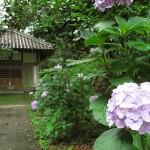 tsumekiri-fudouson_ajisai_20150614_04