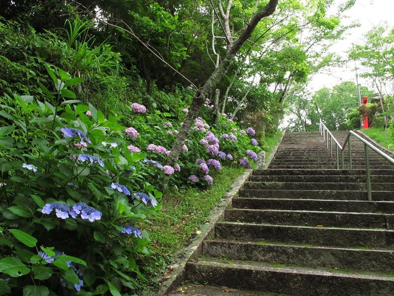 tsumekiri-fudouson_ajisai_20150614_06