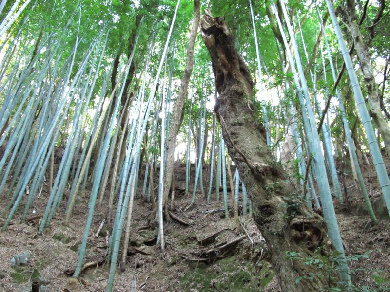 tsumekiri-fudouson_takebayashi