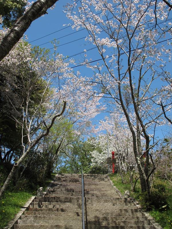 tsumekiri-fudouson_sakura_20160406_06