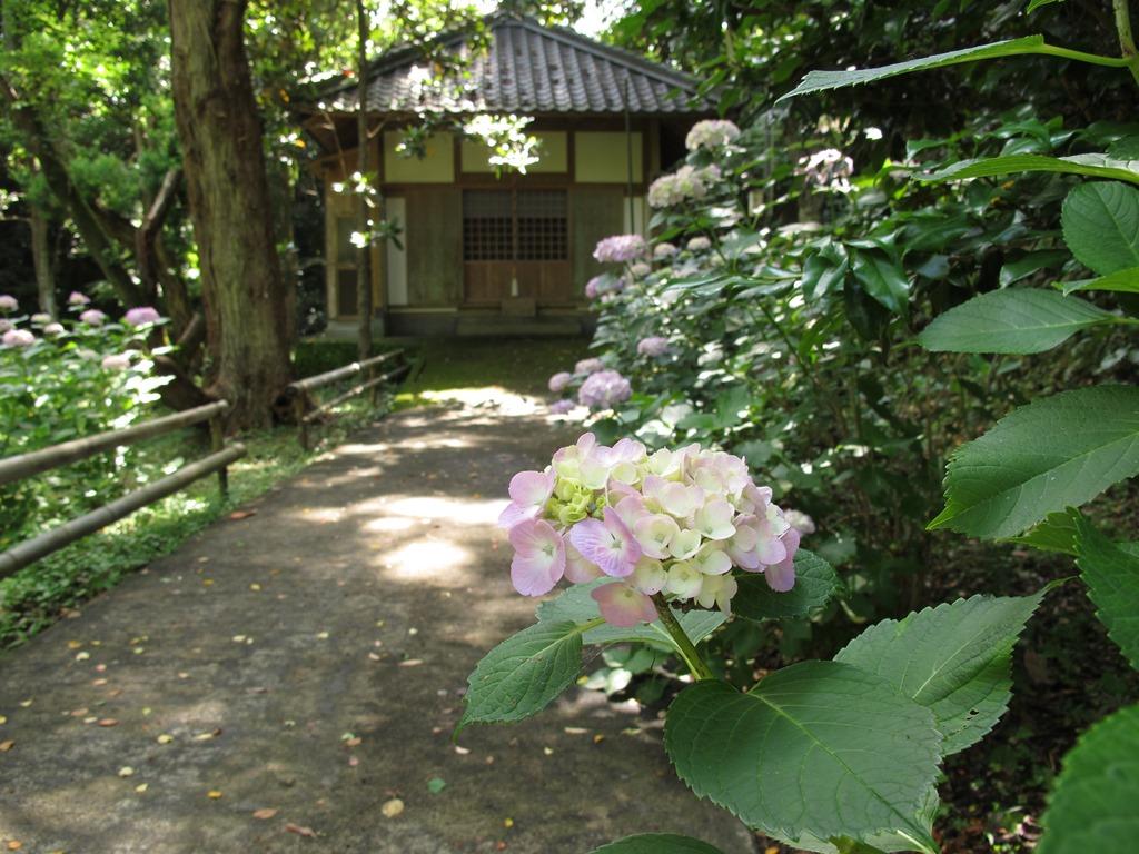 ajisai_to_yakushidou_20160608