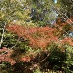 11月中旬になるも、紅葉の見頃はもう少し先・・・?